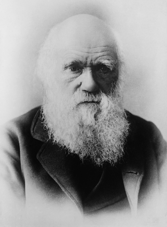 Darwin_restored2